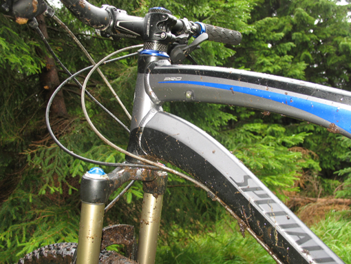 specialized_camber